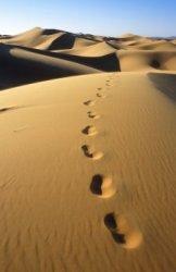 desert_walk
